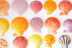 Collection of various colorful seashells on white background Royalty Free Stock Images