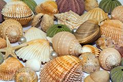 Collection of various colorful seashells on white background Stock Photos