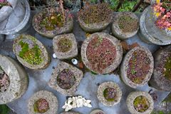 Collection of various evergreen plants and succulents in the garden on the mosaic table in homemade concrete containers royalty free stock images