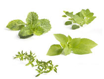 Collection of various herbs, isolated on white Royalty Free Stock Photos