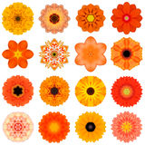 Collection Various Orange Concentric Flowers Isolated on White Stock Images