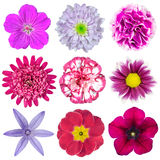 Collection of Various Pink, Purple, Red Flowers Stock Photography