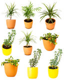 Collection of various potted plants Royalty Free Stock Photo