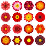 Collection Various Red Concentric Flowers Isolated on White. Big Collection of Various Red Concentric Pattern Flowers. Kaleidoscopic Mandala Patterns Isolated on Royalty Free Stock Images