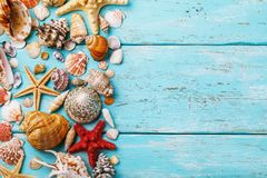 Collection of various sea shells on wooden board stock photos