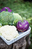 Collection of various types of cabbage Royalty Free Stock Images