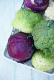 Collection of various types of cabbage Royalty Free Stock Photography