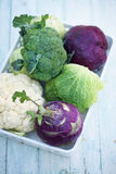 Collection of various types of cabbage Royalty Free Stock Image