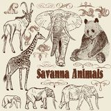 Collection of vector animals  African Savanna Royalty Free Stock Photo