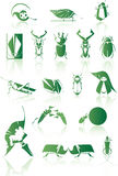Collection of vector bugs. Collection of vector isolated bugs Royalty Free Stock Photography