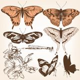 Collection of vector butterflies for design Stock Photos