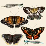 Collection of vector colorful butterflies in vintage style Royalty Free Stock Photo