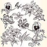Collection of vector decorative hand drawn flowers for design Royalty Free Stock Images