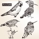 Collection of vector detailed birds Royalty Free Stock Photography