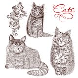 Collection of vector detailed hand drawn cats Stock Images