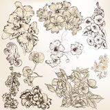 Collection of vector detailed hand drawn flowers for design Stock Photos