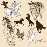 Collection of vector detailed horses for design Royalty Free Stock Images