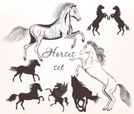 Collection  of vector detailed horses with silhouettes for desig Royalty Free Stock Image
