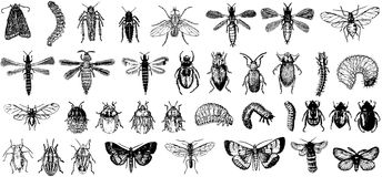 Collection of vector detailed insects Stock Images