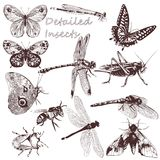 Collection of vector detailed insects for design Royalty Free Stock Images