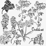 Collection of vector detailed orchid flowers Stock Image