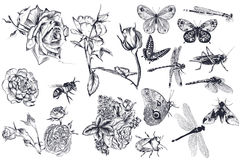 Collection of vector drawn roses and insects for design. Collection of vector hand drawn roses and insects for design Royalty Free Stock Photos
