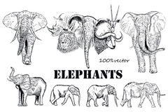 Collection of vector engraved African elephants animals Stock Photography