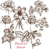 Collection of vector engraved flowers in antique style Royalty Free Stock Images