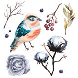Collection vector flowers , branches, cotton,  bird, wild  Berry and leaves Royalty Free Stock Image