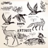Collection of vector hand drawn animals and flourishes Royalty Free Stock Photos