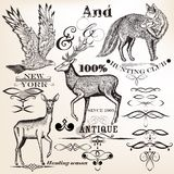 Collection of vector hand drawn animals and flourishes Stock Images