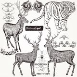 Collection of vector hand drawn animals and flourishes in vintag Stock Images
