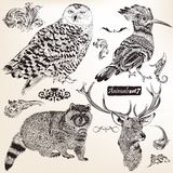 Collection of vector hand drawn animals vector illustration