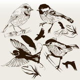 Collection of vector hand drawn birds for design. Vector set of detailed hand drawn birds for design Stock Image