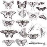 Collection of vector hand drawn butterflies Royalty Free Stock Image