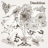 Collection of vector hand drawn  dandelion flowers and swirls fo Stock Images