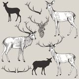 Collection  vector hand drawn deer in vintage style Stock Photography