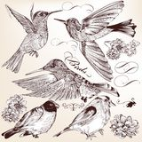 Collection of vector hand drawn detailed  birds for design Stock Images