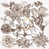 Collection of vector hand drawn detailed flowers for design vector illustration