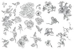 Collection of vector hand drawn flowers for design royalty free stock photography