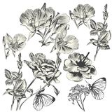 Collection of vector hand drawn flowers for design Stock Photos