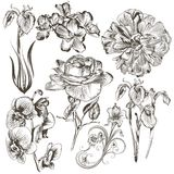 Collection of vector hand drawn flowers Stock Photos