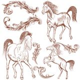 Collection of vector hand drawn horses and flourishes for design Royalty Free Stock Photo