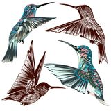 Collection of vector hand drawn hummingbirds. Vector set of detailed hand drawn birds for design Stock Photos