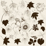 Collection of vector hand drawn leafs and flowers for design Stock Photography