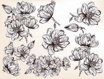 Collection of vector hand drawn magnolia flowers in engraved sty Stock Image