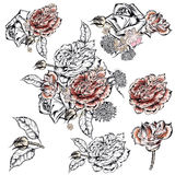 Collection of vector hand drawn roses. For design Royalty Free Stock Photos