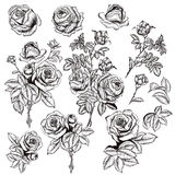 Collection of vector hand drawn roses for design in engraved sty Stock Images