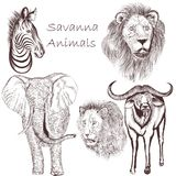 Collection of vector hand drawn savanna animals for design Royalty Free Stock Photo