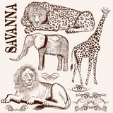 Collection of vector hand drawn savanna animals Royalty Free Stock Image